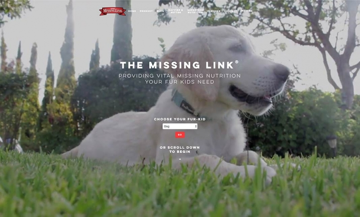 The Missing Link website