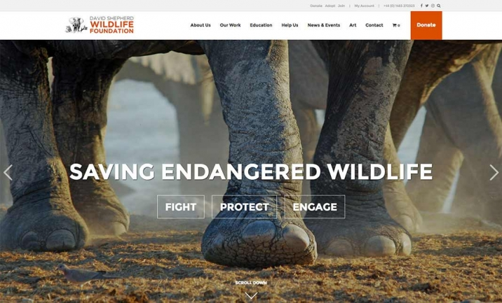David Shepherd Wildlife website