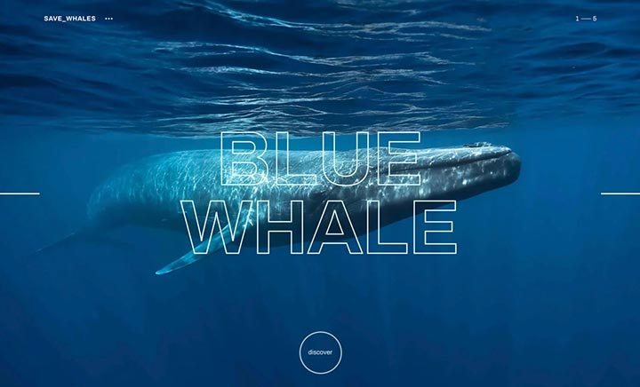 Save Whales website